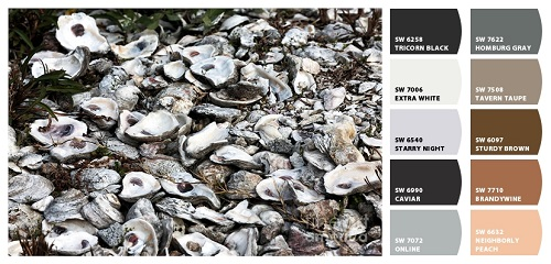 Oyster Shells; Art; John Rizzuto; Fine Art America; Sherwin Williams; Paint