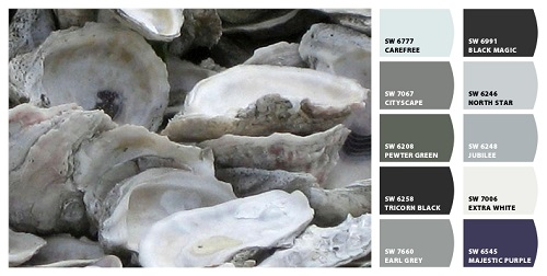 Oyster Shells; Photograph; Art; Jean Baardsen; Fine Art America; Sherwin Williams paint