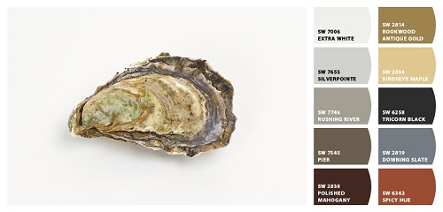 Pacific Oyster; Photograph; Oyster Shell; Art; David Nunuk; Fine Art America; Sherwin Williams; Paint